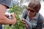Karly examines the pear slugs