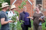 Vaiya asks about caring for old fruit trees - it is usually easier to start again with a whip (single stalk) from a nursery than to try renovating old trees