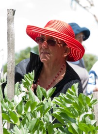 joan amongst the broad beans