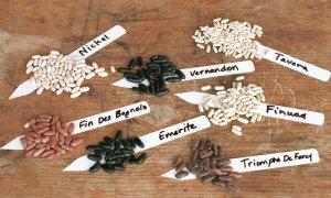 vegetablegardenerbeans - image from http://www.vegetablegardener.com/item/5634/growing-beans-to-save-for-seed