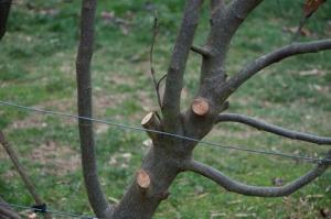 diggers pruning wkshp002
