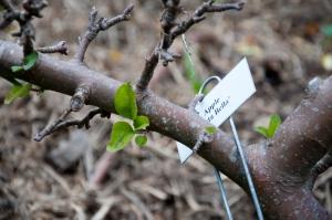 diggers pruning wkshp024