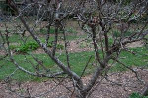 diggers pruning wkshp003