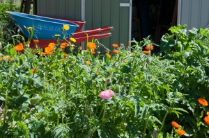 Spring in the Newstead Community Garden