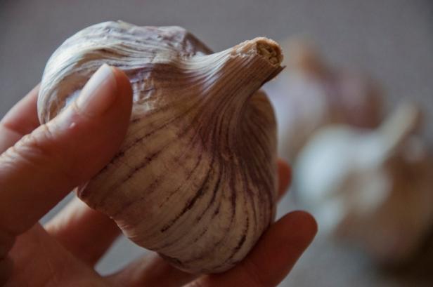 garlic harvest 2013/14