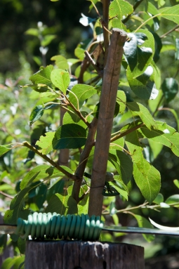 use soft twine to secure branches