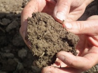 signs of worms and organic matter