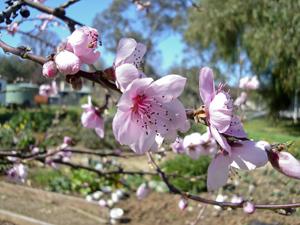 spring in the garden 2014