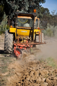 Preparing ground for garlic in 2015
