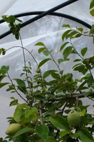 garden nets and shade at newstead community garden
