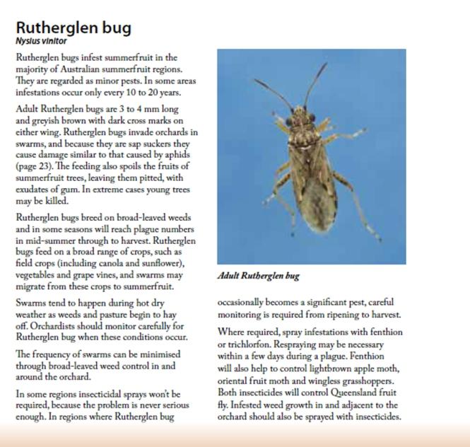 rutheglen bug_1