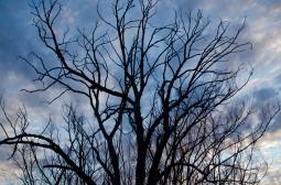 winter's night, evening light, growth