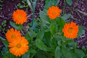a welcome bright spot in the garden