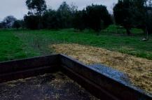 weeding and mulching at the garlic fundraising crop