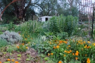 Weeds and growth are rampant after good winter and spring rains at the garden.