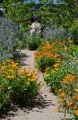 Festival of Gardens 2016 and our vibrant community garden is brimming with flowers and plants