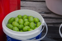 large olives, could be kalamata or spanish queen?
