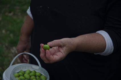 how to tell an olive is ripe? squeeze it