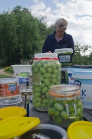 Julie and Julia run us through how to preserve olives in brine.