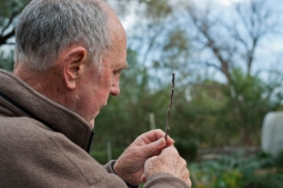 John Pinniger from Heritage Fruits Society led gardeners on a practical, hands and blades on demonstration of how to graft.